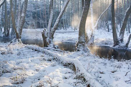 Foggy river in the forest at winter photo