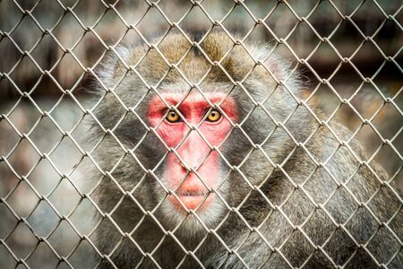 Baboon in a cage Stock Photo - 12851554