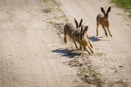The rabbits running around the field Stock Photo - 13724954