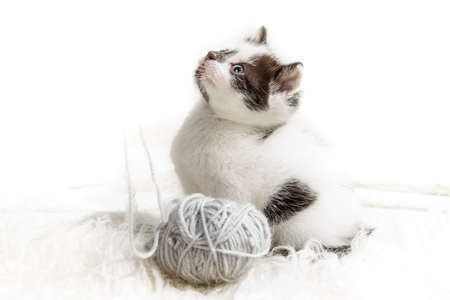 hank: Kitten and a ball of hank Stock Photo