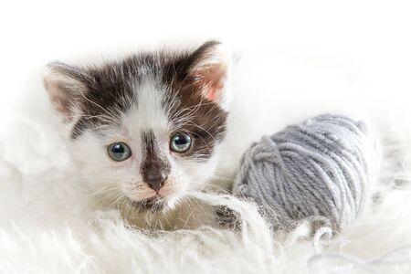hank: Closeup small kitten with hank Stock Photo