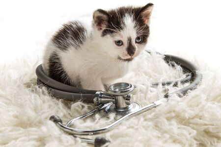 Doctor for small kittens photo