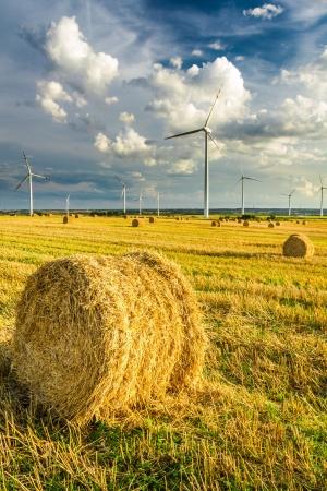 Molinos de viento generadores de energía verde