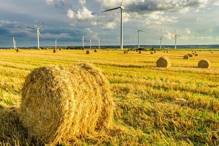 wind turbines: View of electric windmills in summer