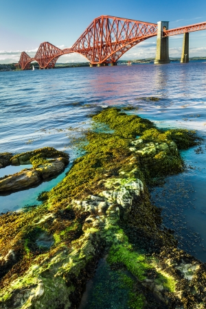 Seaweed and Forth Road Bridge in Scotland photo