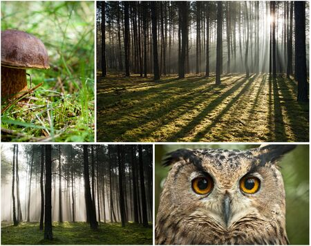 Wildlife in the forest at dawn photo