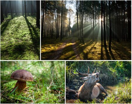 Wild flora and fauna in the forest photo