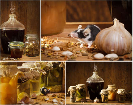 Collage of stocks jar in the basement with small mouse photo