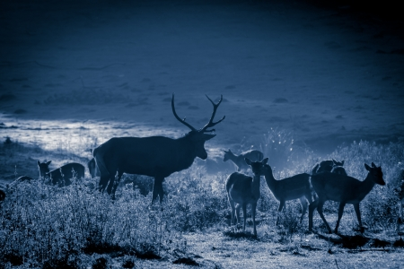 Herd of deer standing on the meadow at moonlight Stock Photo - 17674362