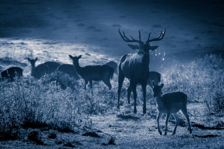Deer and herd at moonlight in autumn Stock Photo - 17674323