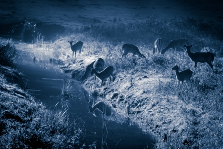 Reflection of antlers herd standing near the river at moonlight Stock Photo - 17674405