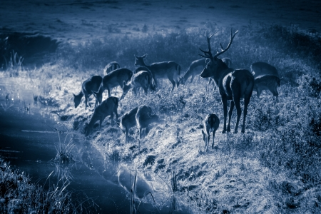 Deer standing on the frozen meadow near the river at moonlight photo
