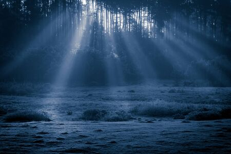 miracle leaf: Misty old foggy forest at moonlight Stock Photo