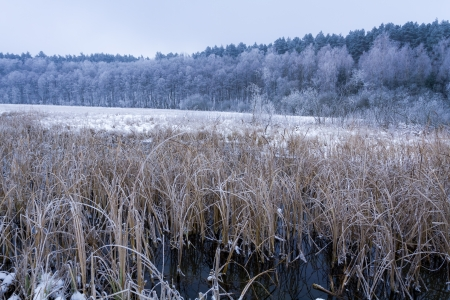 Frozen reeds in the lake at winter Stock Photo - 17674447