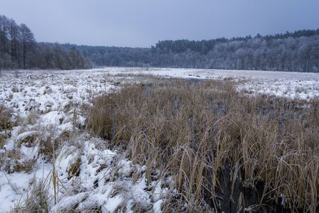 Frozen swamp covered with snow in the winter photo