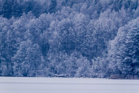 Frozen forest at the lake in winter photo