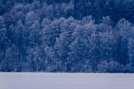 Frozen lake at the forest in winter photo