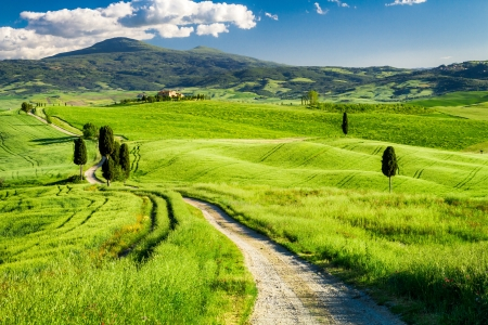 Beautiful view of the path between the fields in Tuscany photo