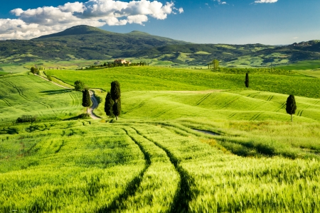 Fields of wheat in the valley in Tuscany photo