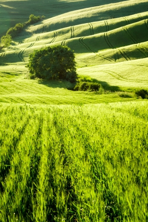 Green fields stretching to the valley in Tuscany photo
