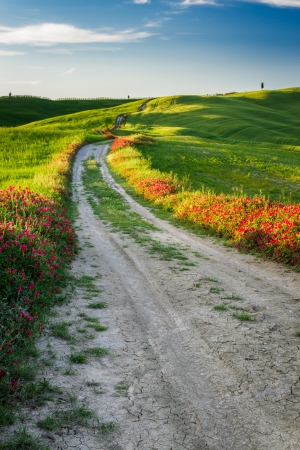 tortuous: Beautiful view of the tortuous path at sunset in Tuscany Stock Photo