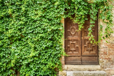 Ancient building with wooden door and ivy photo