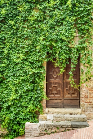 ivy wall: Ancient ivy-clad house with wood door