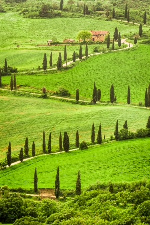 Winding road to agritourism in Italy on the hill, Tuscany photo