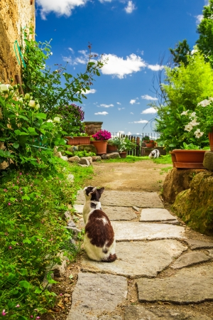 Two cats in ancient garden photo