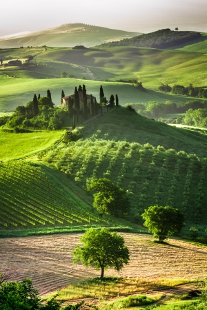 Farm of olive groves and vineyards photo