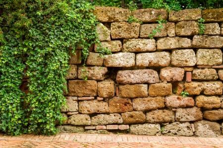 Oude muur bedekt met klimop Stockfoto