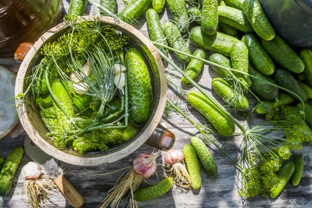 pickling: Pickling cucumbers in the countryside