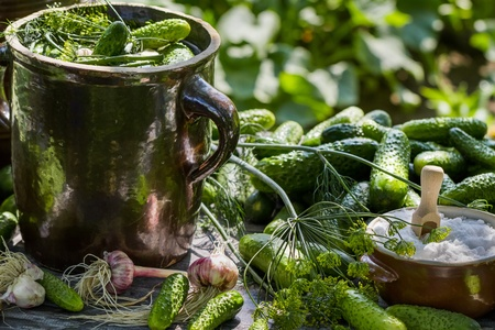 pickling: Preparations for pickling cucumbers in  the village Stock Photo