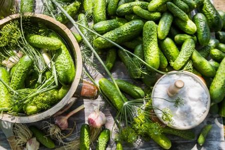 pickling: Pickling cucumbers in a clay pot