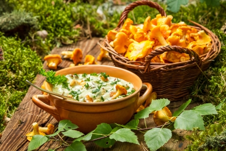 Freshly collected mushrooms in the woods and cooked with cream photo