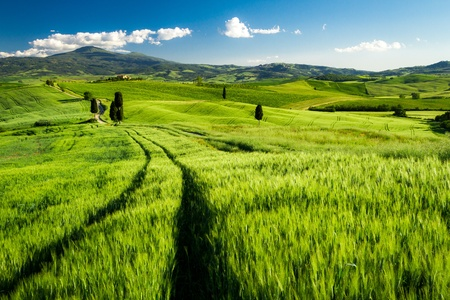 Green fields of wheat in Tuscany, Italy photo