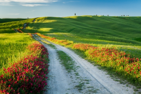 agriturismo: Beautiful view of green fields and meadows at sunset in Tuscany Stock Photo