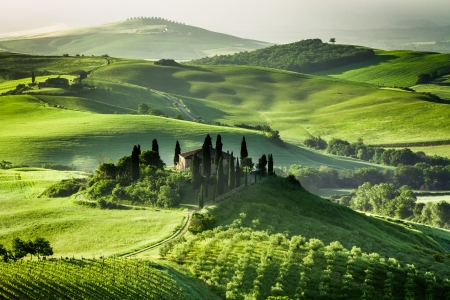 san quirico d'orcia: Farm of olive groves and vineyards