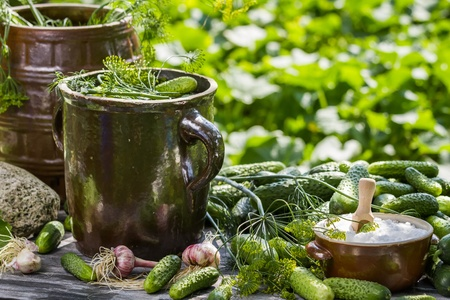pickling: Pickling fresh cucumbers in a clay pot Stock Photo