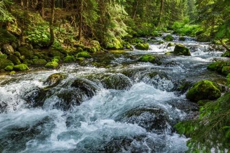 Mountain stream flowing between mossy stones