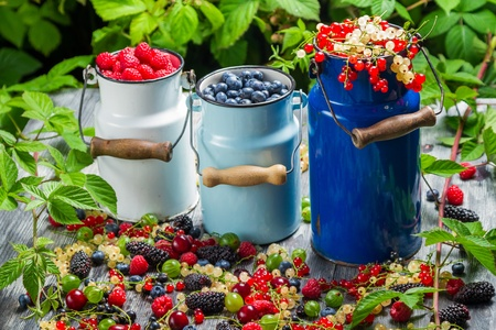 Closeup of fresh wild berry fuits in churn Stock Photo