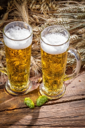 Fresh beer and hops surrounded by wheat Stock Photo - 22171776