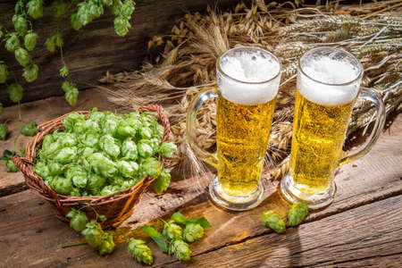 Fresh beer and hop cones Stock Photo - 22171780
