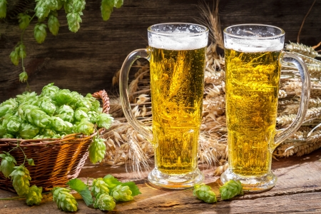 Fresh hops and wheat as an ingredient of beer Stock Photo - 22171781