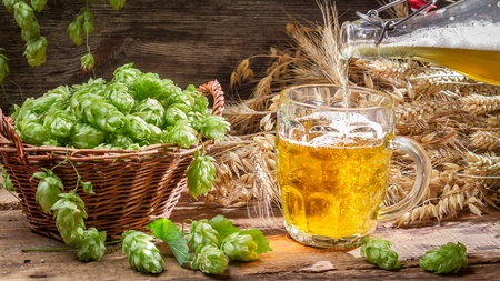 Homemade beer made of fresh hops Stock Photo - 22171787