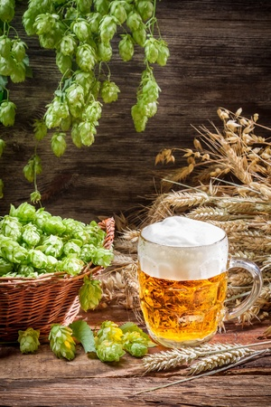 Freshly harvested hop cones and cold beer Stock Photo - 22171790
