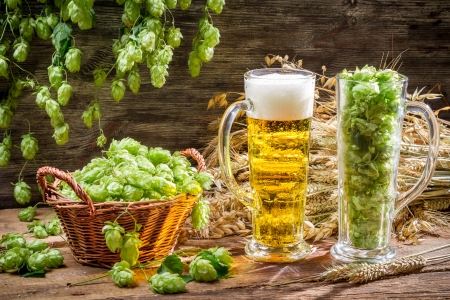 Harvest hops and wheat for fresh homemade beer Stock Photo - 22171800