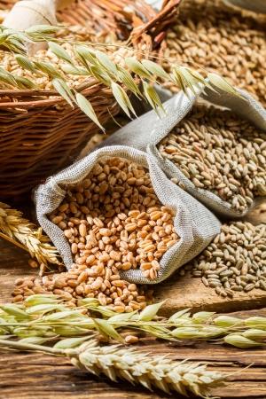 Centeio, cevada e trigo s