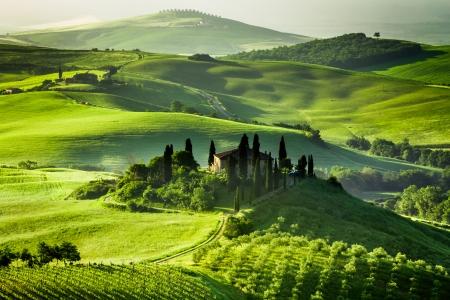 Farm av olivlundar och vinodlingar Stockfoto