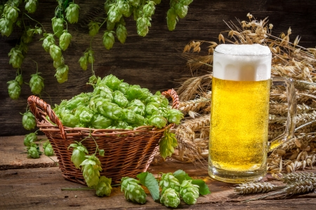 Basket full of hops and a cold beer Stock Photo - 22586204